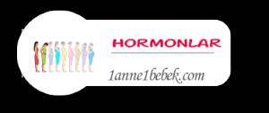 hamilelik hormon değişimi
